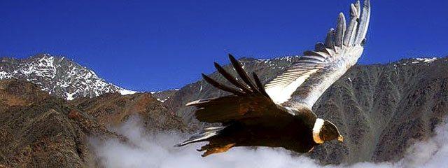 Mirador de Condores Cañon del Colca