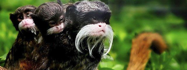 Islas Monkey Puerto Maldonado